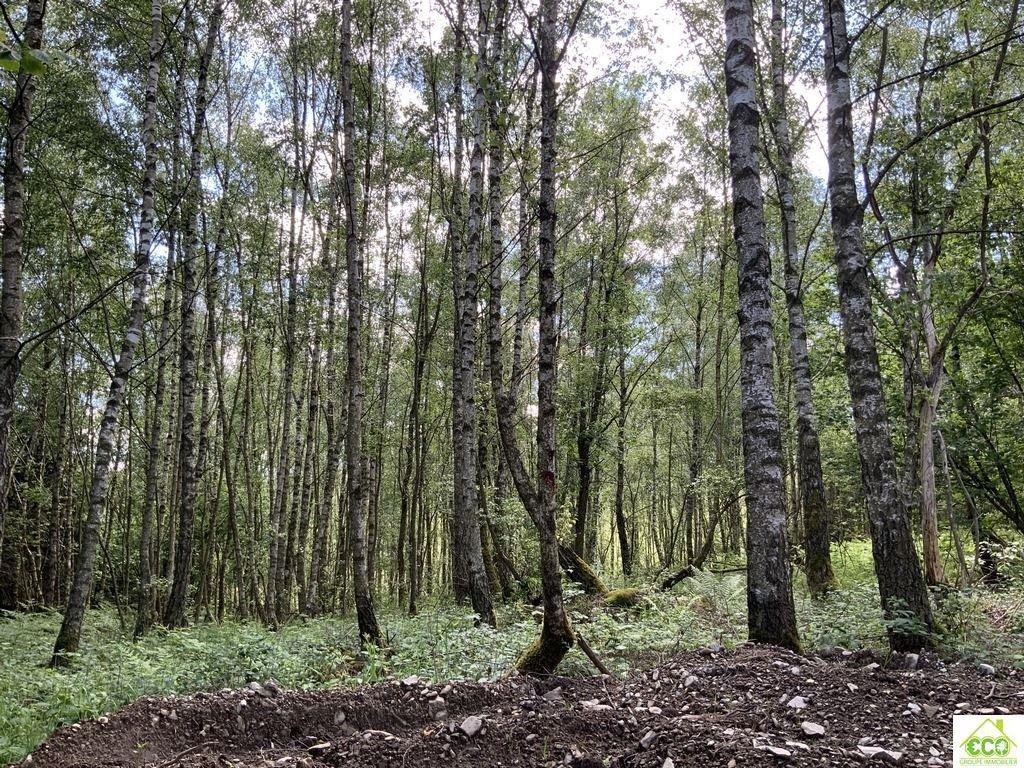 Image 9 : Terrain en zone forestière à 6980 LA ROCHE-EN-ARDENNE (Belgique) - Prix 145.000 €