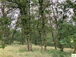 Terrain en zone forestière à 6980 LA ROCHE-EN-ARDENNE (Belgique) - Prix 9.500 €