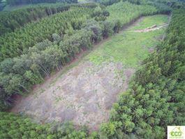 Terrain en zone forestière à 6660 HOUFFALIZE (Belgique) - Prix 19.500 €
