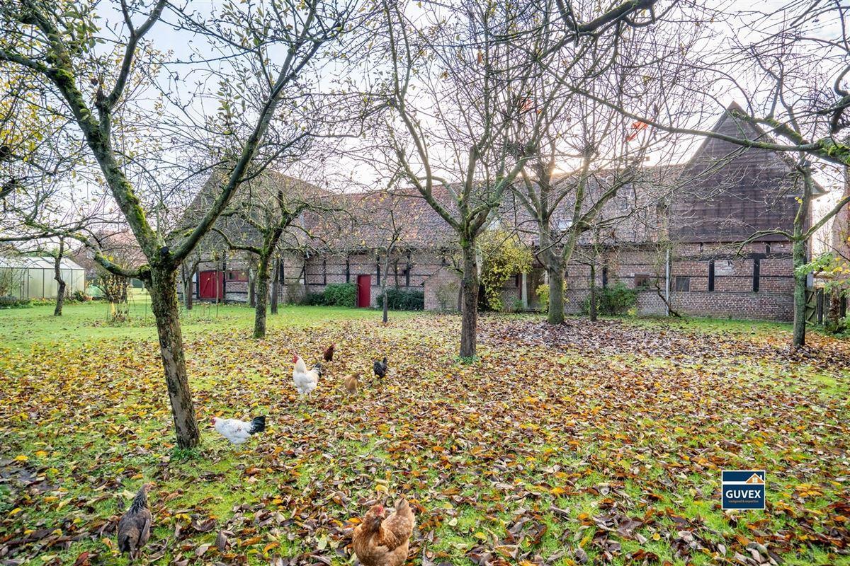 Foto 33 : Hoeve te 3800 ZEPPEREN (België) - Prijs € 475.000
