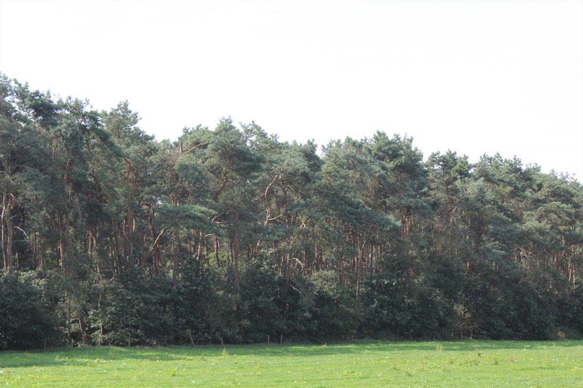 Foto 1 : Grond te 2990 Wuustwezel (België) - Prijs € 39.500