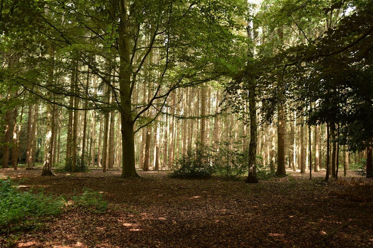 Foto 1 : natuurgebeid te 9250 WAASMUNSTER (België) - Prijs € 110.000