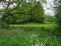 Image 4 : Terrains cultivés  à 6690 VIELSALM (Belgique) - Prix 10.000 €