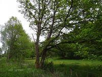 Image 6 : Terrains cultivés  à 6690 VIELSALM (Belgique) - Prix 10.000 €